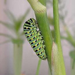 Caterpillars: Week 2