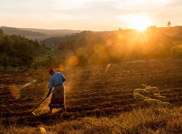 Nundu Farmer