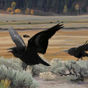 Lamar Valley Autumn Raven Chase