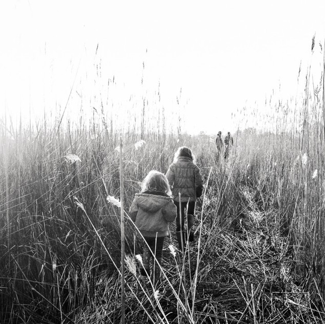 Into the Marsh