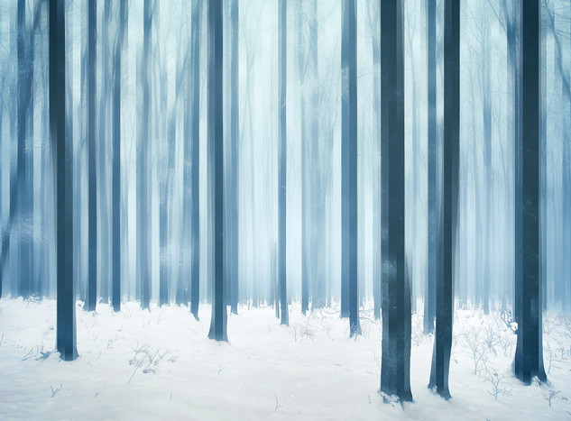Re/Section: The Forest #4