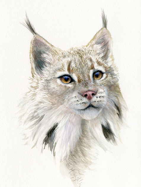 First Place-young Lynx