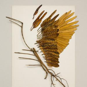 Icarus botanicus
