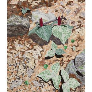 Appalachian Spring--Trillium