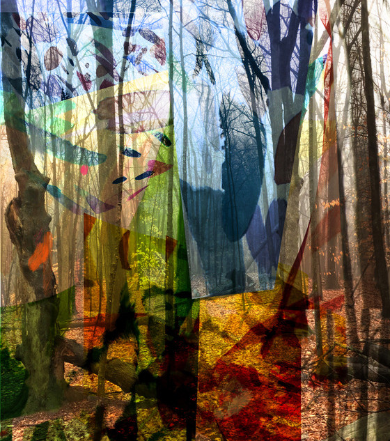 Cathedral Forest