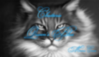 elevage maine coon Alsace