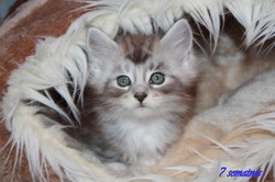chatons 7 semaines 022