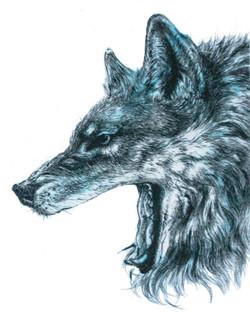 狼(横顔)