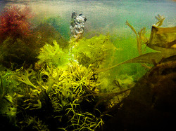ALGAE WORLD