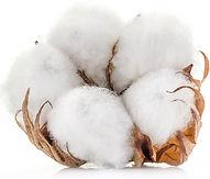 cotton seeds_edited.jpg