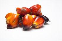 palm kernell.jpg