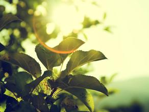 Unilever anuncia el uso exclusivo de energías verdes