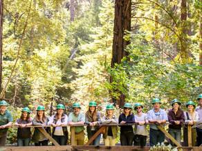 Así se apoya la restauración de la selva colombiana