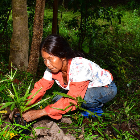 Con 'Ama, Vive, Ayuda Amazonas', HP Inc. sembró más de 10,000 árboles en el Amazonas