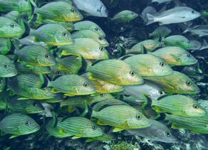 Nuevo libro: Praderas Submarinas de Colombia