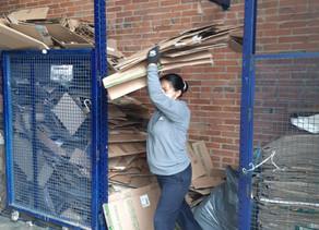 Recicladores en Bogotá han salvado 3.340 árboles