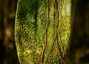 Microecosistemas de Colombia, biodiversidad en detalle
