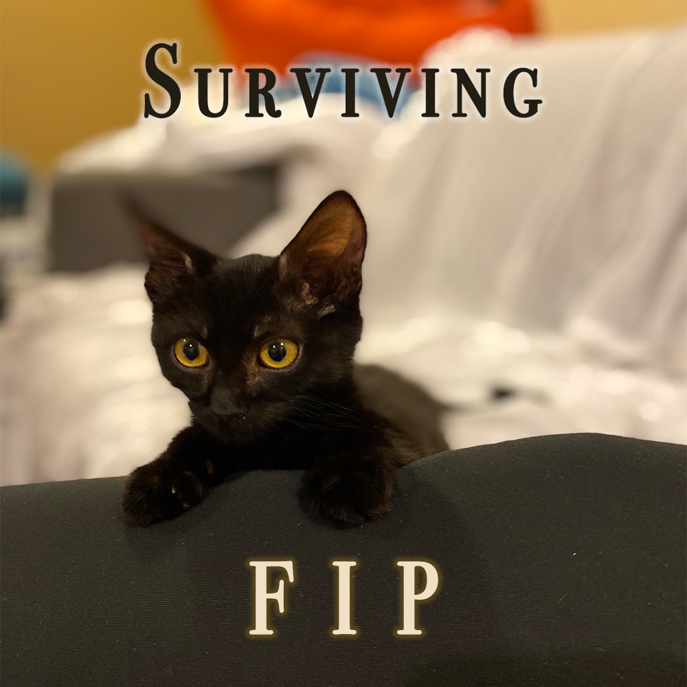 Surviving FIP with Mo the Cat