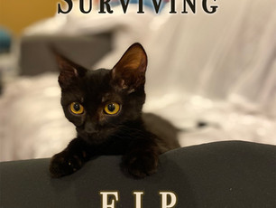 Surviving FIP