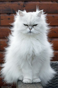 Angry matted kitty