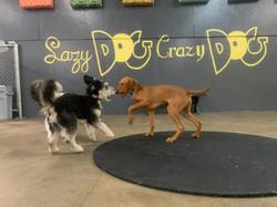 Crazy 2 play area