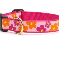Dog Collars & Pet