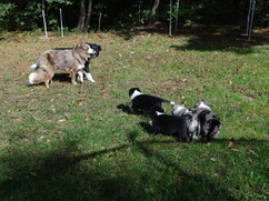 Teva with her litter