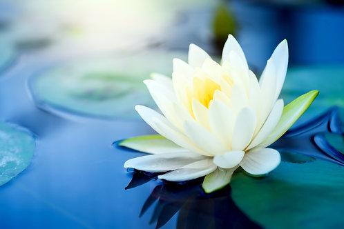 White Lotus Elixir