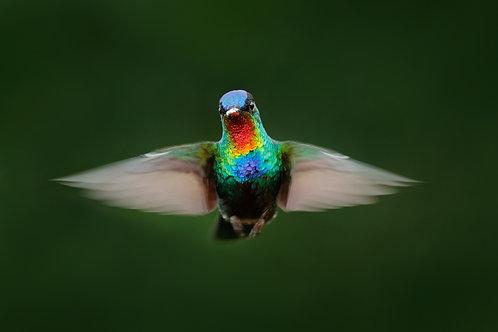 Quínde Nectar