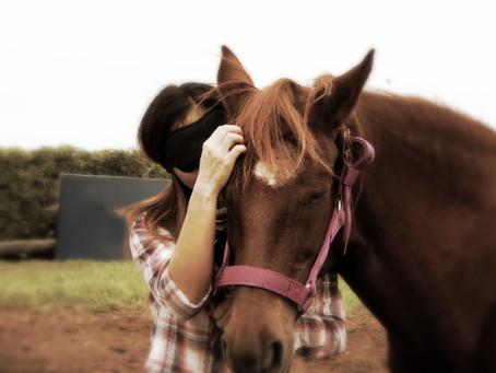 """De """"Inteligencia Racional"""" e """"Inteligencia Emocional"""". De humanos y de caballos."""