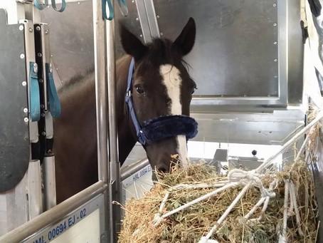 5 Tips para transportar a tu caballo en avión de forma segura