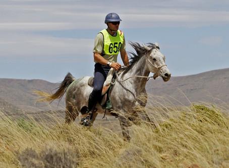 El uso de electrolitos en los caballos de deporte: ¿cómo usarlos?