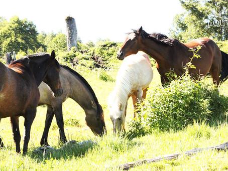 La Vitamina del sol en nuestros caballos