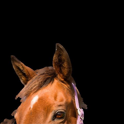 ojos y orejas caballos .png