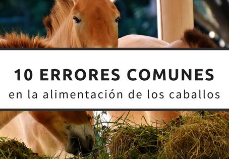 Errores comunes en la alimentación de los caballos (parte 2)