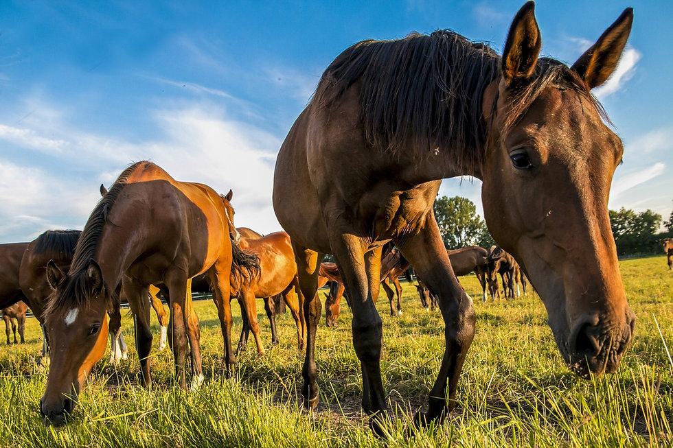 horses-1622167_1920.jpg