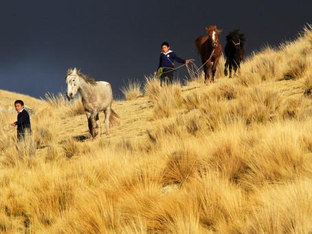 Caballo Andino Cuzqueño: proteger el motor económico de las comunidades alto-andinas.