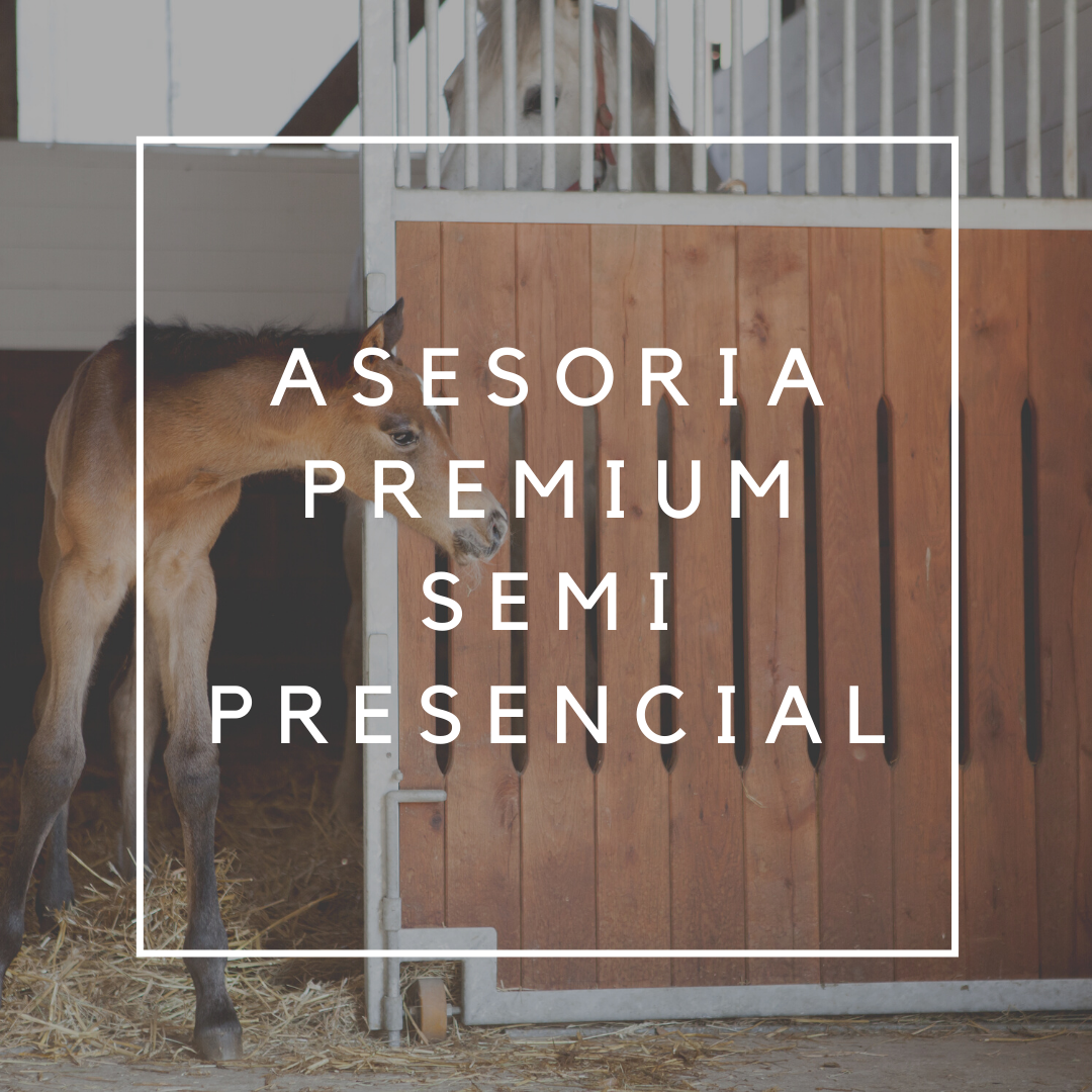 Premium semi-presencial