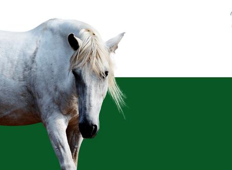 El caballo: ¿un ser inteligente?