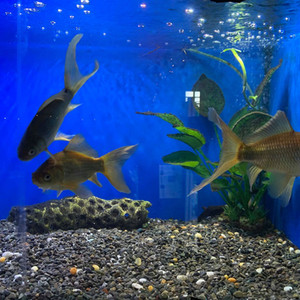 XL Goldfish.jpg