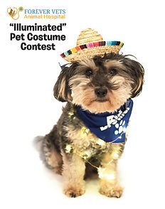 Illuminated Pet Contest poster no web.jp