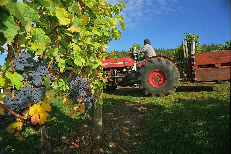 Hard at work at the vineyard.