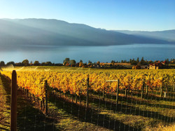 Fall in the Okanagan.