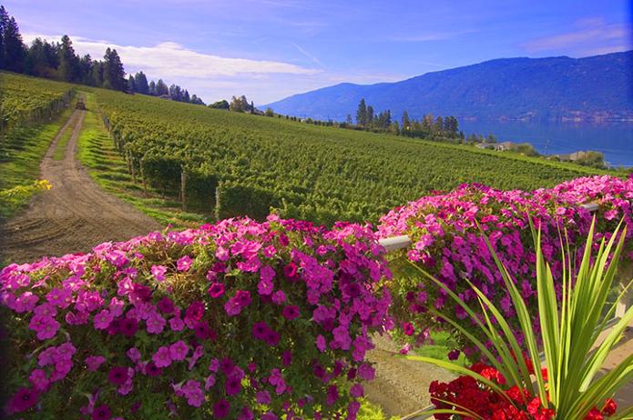 Vineyard views.