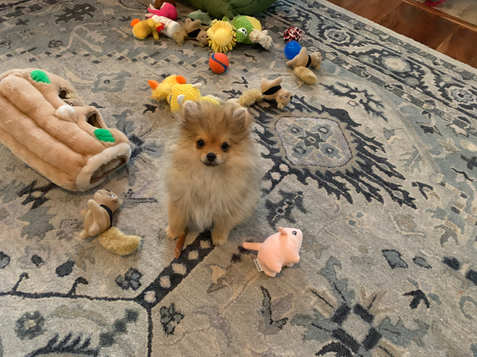 Puppy Archie pic update by Mama Elfriede