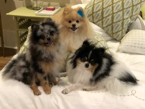 3 cutie pies - update pic from The Pelt's family.