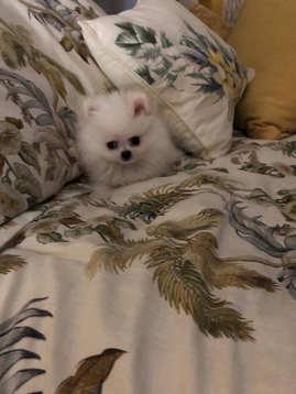 Mini's pic update by Mama Lori