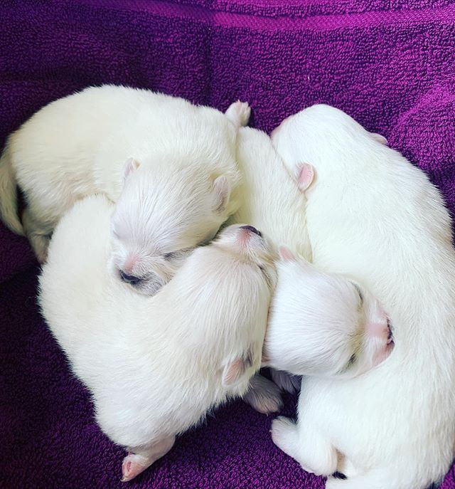 Our Co-Owner litter. They are beautiful