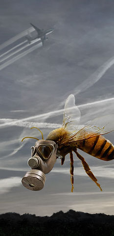 Gas Mask Bee5.jpg