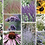Thumbnail: WILDLIFE PLANT MIX